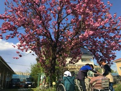 お庭には桜の木が植えて有ります。とても綺麗で、季節を楽しむことが出来ます。他にも梨の木等が植えて有ります。