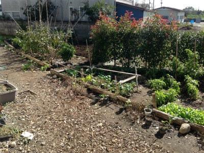 庭園・畑(農作業できます)