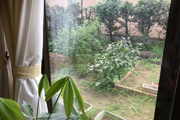 窓から見える畑