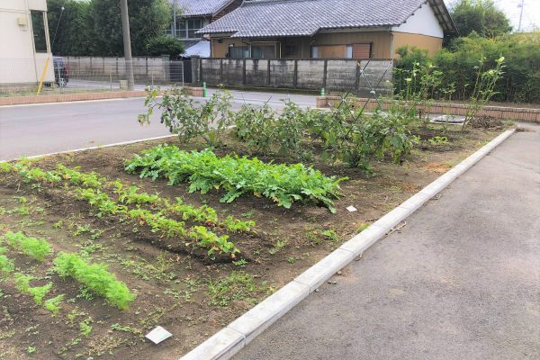 無農薬野菜の菜園